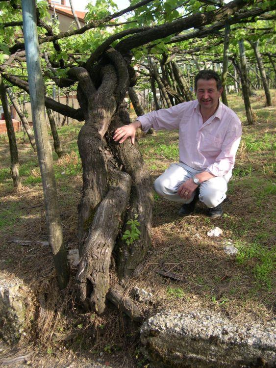 Giuseppe Apicella, vigneron a Tramonti (SA)