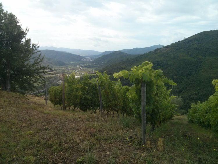 Salvatore Magnoni - Vigna con vista sulla Valle dell'Alento