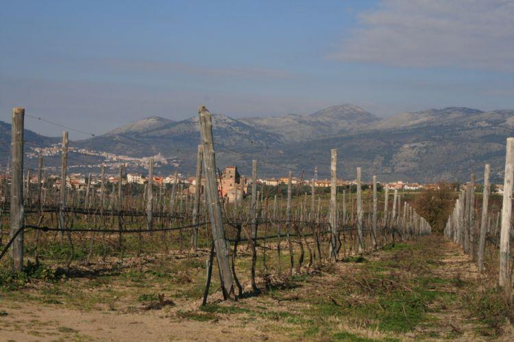 Zona Camarato della Tenuta San Castrese di Villa Matilde, Sessa Aurunca (CE)