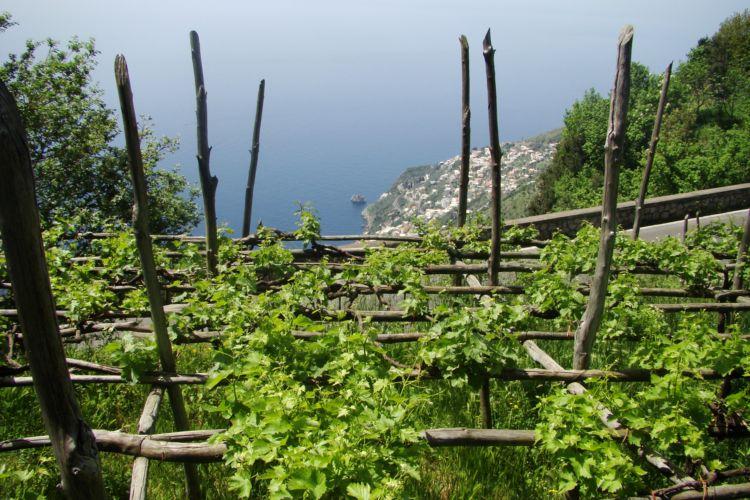 Costa d'Amalfi, vigna terrazzata - Crediti foto: Raffaele Del Franco