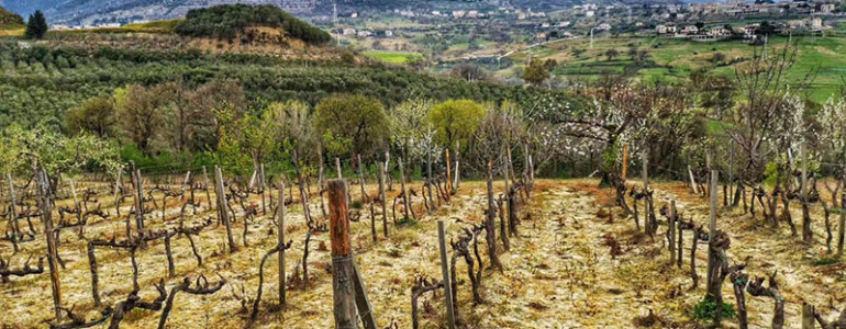 winenewstv_articolo_campania_stories_1